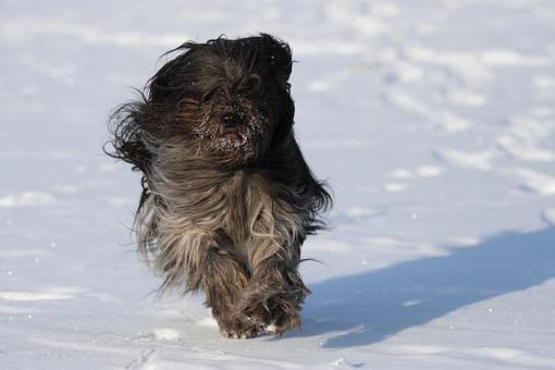 Heevens 11 årige datter elsker også en kold tur i sneen. Tak til Marjelle for billedet.