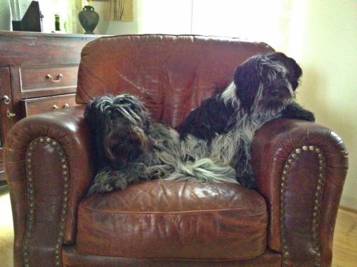 Odie og Flik-Flak hygger sig i lænestolen foran brændeovnen, efter en dejlig tur i det snefyldte landskab.