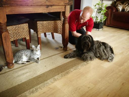Odie har taget mødet med vores nye kat forbavsende positivt.