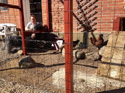 Hundene var noget overraskede over de små fjerkræ som pludselig fik lov til at gå pludrende rundt i hjørnet af gårdspladsen. Flik-Flak var ellevild for at lege med dem, men den går desværre ikke...