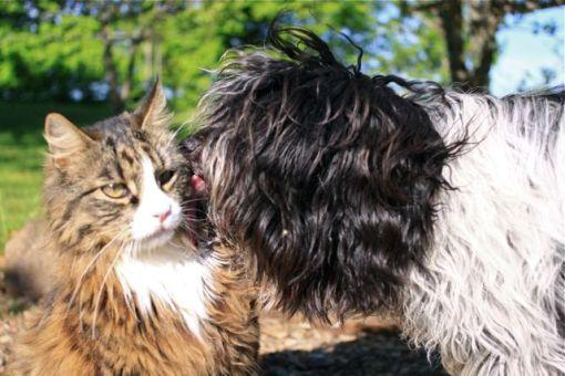 Flik-Flak elsker jo bare Gizmo – den lettere overlegne han-kat :)