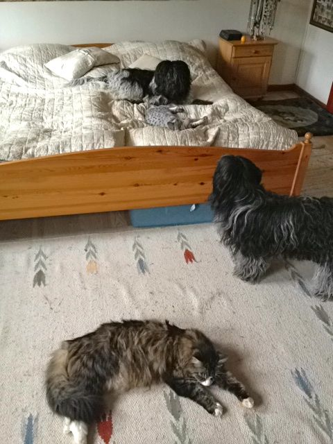 Dingle, som er af den lidt ældre og mere velopdragne generation, synes det er noget underligt noget at de ligger i sengen midt på dagen!