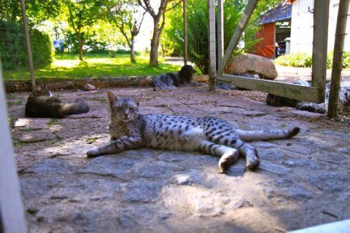 Kattene holder Odie med selvskab, mens Flik-Flak har selvskab af søster Dingle. Som I kan se, så er hans snude helt inden for lågen, for mor lugter bare SÅ godt...