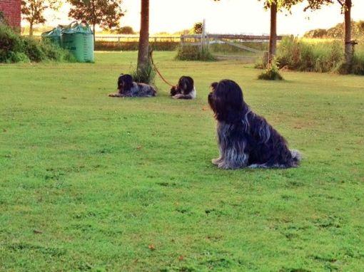 Dingle sidder pænt mens de andre venter (lige så pænt) på at det bliver deres tur til at træne.