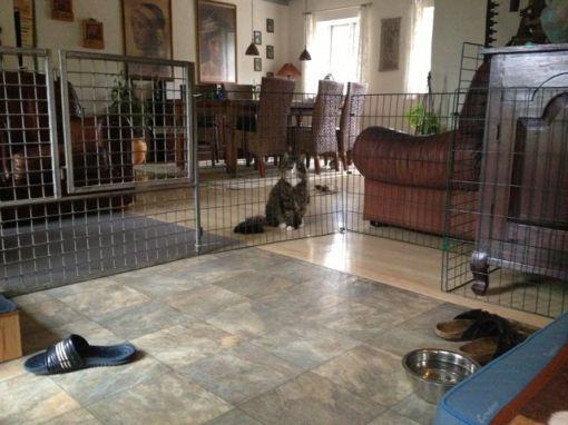 """Gizmo er utrolig fornærmet over at han pludselig er formént adgang til """"hans"""" del af stuen."""
