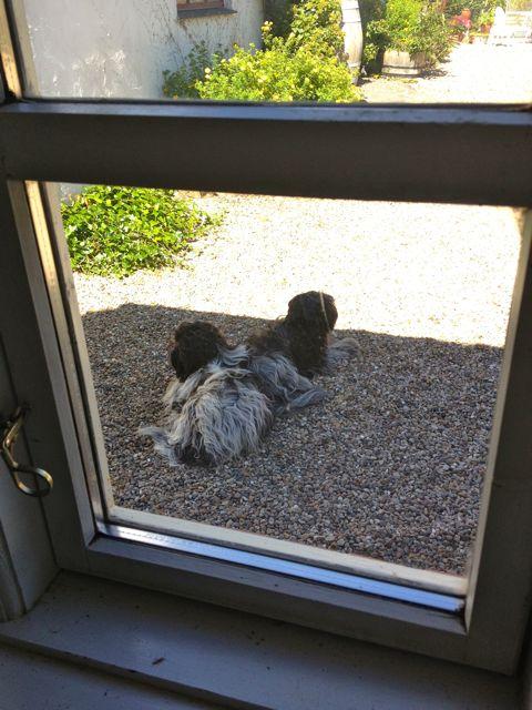 Når det er vejr til det, foretrækker de andre dog at ligge udenfor, mens Odie ligger inde med sine nye yndlinge.