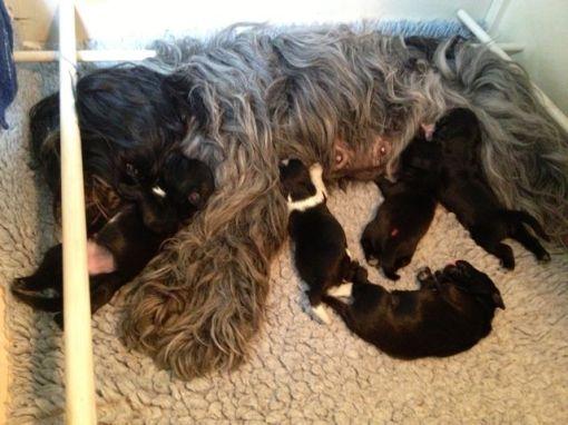 Efter at mælken har strømmet, falder de én efter én af patterne, og falder i søvn.