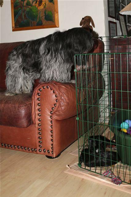 Dingle overvejer om hun kan nå at hoppe ind og hugge en bamse uden at mor og hvalpene opdager det...