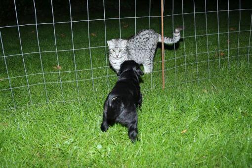 Det var tydeligt at hvalpen tog mødet med katten som noget positivt, og Mau-Mau virkede oprigtigt glad for mødet.