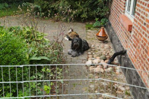Dingle og Gizmo lagde sig pænt afventende på lidt afstand af de små larmende krapyler.