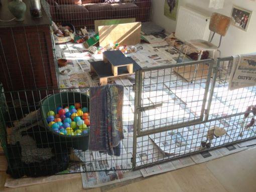 I dag var så første gang hvor alle aviser blev udskiftet og gulvet fejet. Samtidig blev fødekassen fjernet, så der nu er mere plads til leg.