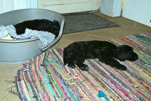 Efter en lang og begivenhedsrig dag, bliver de små RIGTIG trætte...