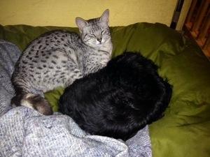 Når storebror ikke er her mere, kan Mau-Mau godt bruges som hyggedyr når der skal soves...