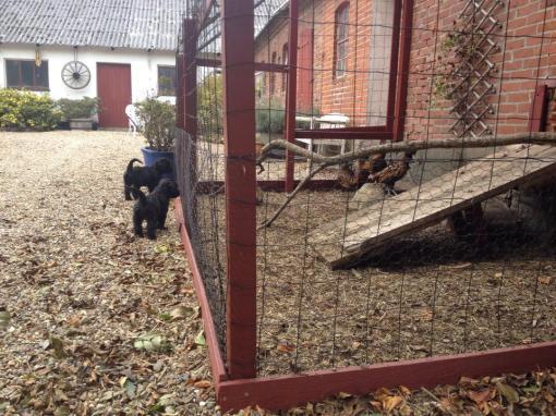 Geo og GetUp tager lige et kig på hønsene inden de fortsætter deres udforskning af gårdspladsen.