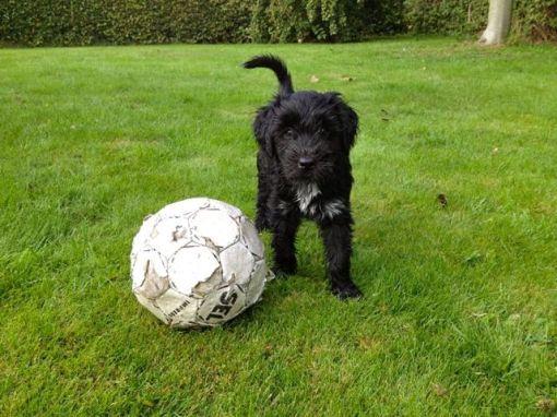 Grietje har også en bold, men af en lidt anden kaliber, tror den er beregnet til de voksne hunde i familien...