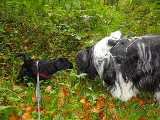 Grietje er i skoven med sin nye bedste ven, Solankers Timon.