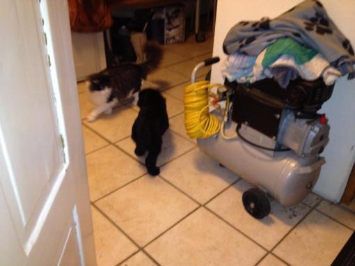 Grietje møder katten Kenan.