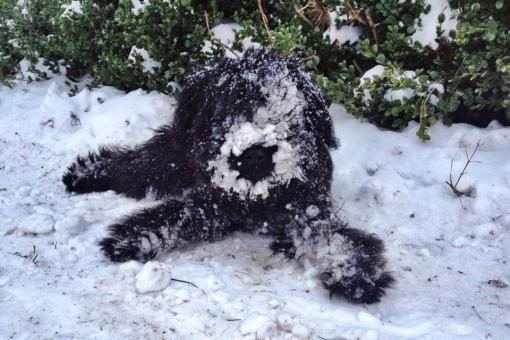 GetUp elsker sne, men forstår ikke hvorfor hun på et tidspunkt får alle de isklumper i pelsen. Hun prøver at rulle sig, og gnide sig i sneen, men lige meget hjælper det...