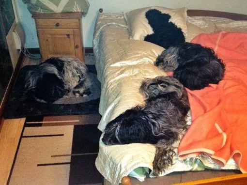 Så har jeg problemet igen: Hvor skal jeg sove?
