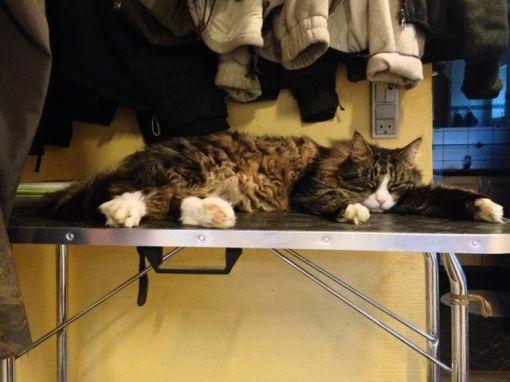 Gizmo gider absolut ikke blive redt, men trimmebordet forbinder han åbenbart ikke med noget negativt...
