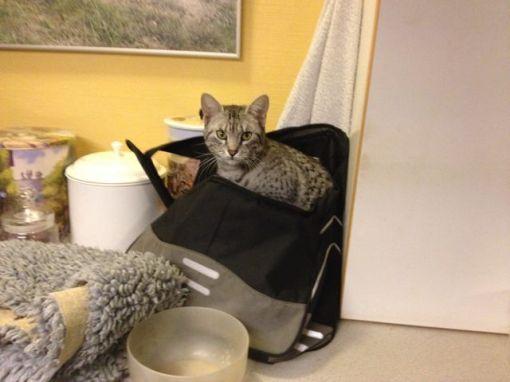 Så skal der pakkes ud, og så snart Mau-Mau ser en tom taske, kravler hun ned i den... Skøre kat