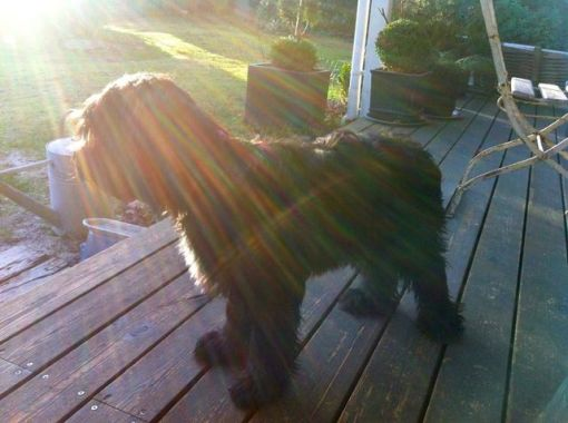 DAN de DOES Gaia Munte i en vinter-solstråle (Tak: Mette Poulsen)