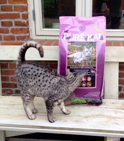 """""""HOV!"""" siger Mau-Mau """"Hvem er den grimme kat som er afbilledet på Kingsmoor's kattefoder pose????"""""""