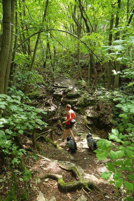 Skovene var enorme og meget varieret.