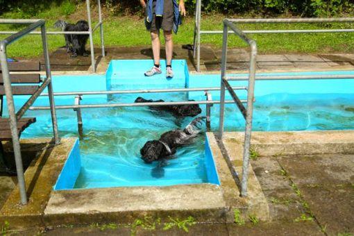 Denne var nok beregnet for børn... men i knap 30 graders varme, fik hundene altså lov til at tage en lille svømmetur i det friske kildevand.