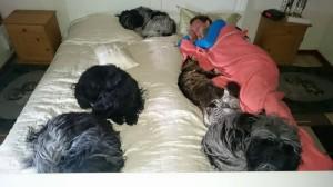 Okay, vi sover måske ikke så godt når vi tillader hunde og katte i sengen, men for pokker! hvor er det hyggeligt :)