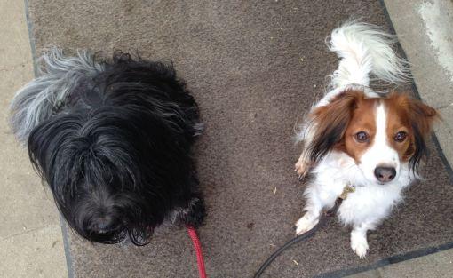 Dingle og hendes nye agilityven, Falco, venter pænt mens vi besøger toilettet
