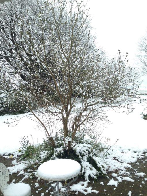 Se lige hvad vi vågnede til: Snevejr!!!! Nu må det altså gerne snart blive rigtig forår.