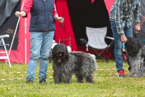 Her var mor ikke pinlig... Flipper bliver 3. bedste hanhund på udstillingen.