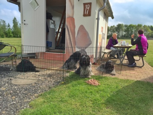 Vores lille hytte med transportabel hundegitter. Dejligt vejr, for en gangs skyld til klubweekend.