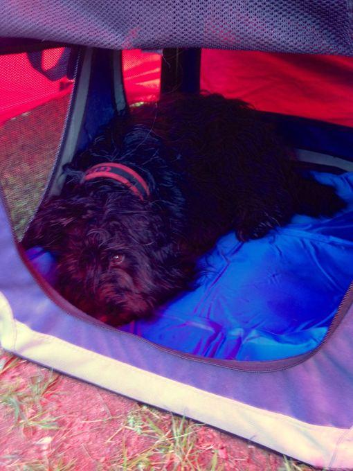 Lille Loppe, meget, meget træt.