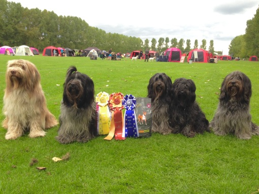Fra højre: Rubin, Loppe, Dingle, Fregne og ikke mindst supporterhunden Rita.